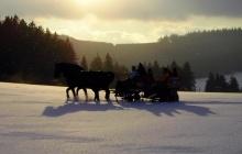 Heiratsantrag im Pferdeschlitten