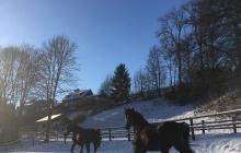 Pferde auf winterlicher Wiese - Schnee, Pferde, Urlaub in Willingen