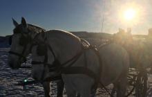 Pferde mit Kutsche auf verschneiter Wiese - Winter in Willingen