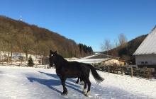 Winterlandschaft Willingen - Skifahren, Skiurlaub Willingen