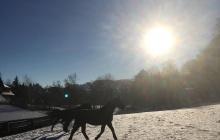 Pferde auf Wiese mit Schnee - Winterurlaub in Willingen