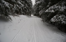 Winterwald in Willingen-Usseln