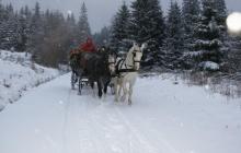 Pferdeschlitten im Winterwald