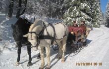 Pferdeschlittenfahrt in Willingen (Upland)