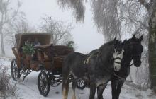 Mit der von Pferden gezogenen Kutsche durch die Willinger Wald-und Heidegebiete