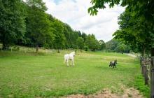 Pferde auf Wiese - Urlaubsgäste